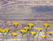 Dandelions on the boards.simple rustic Stock Photography