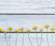 Dandelions on the boards.simple rustic Royalty Free Stock Photo