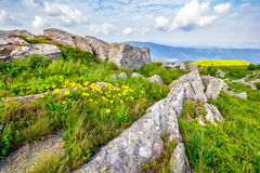 Dandelions among the boulders on hill side. Yellow dandelions in the grass among the huge rocks on hillside in high mountains Royalty Free Stock Photos