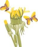 Dandelions and butterflies stock photos