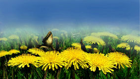 Dandelions with butterfly. On background sky stock photo
