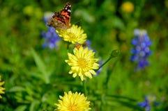 Dandelions & Butterfly. Wildflowers Stock Image