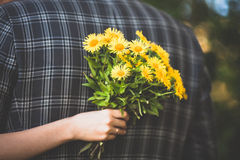Dandelions and checkered jacket Royalty Free Stock Photography