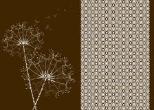 Dandelions with circle pattern effect. Stock Photos
