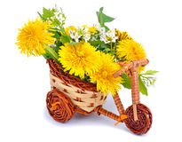 Dandelions decoration in the toy bicycle isolated on white Royalty Free Stock Photos