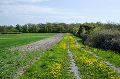Dandelions at dirt road Stock Photos