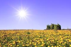 Dandelions on field Stock Photography