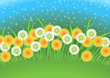 Dandelions field. Vector cartoon background with dandelion flowers and dandelion seeds flying in the air Stock Photography