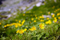 Dandelions field, copyspace Stock Photo