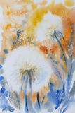 Dandelions. On a field. Nature background. Picture created with watercolors Royalty Free Stock Images