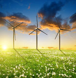 Dandelions field with wind turbines Stock Photography