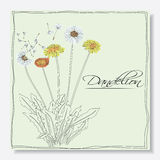 Dandelions flowers Royalty Free Stock Images