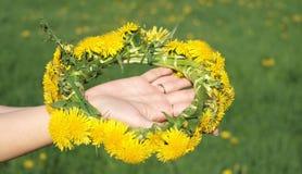 dandelions girlanda Zdjęcie Royalty Free