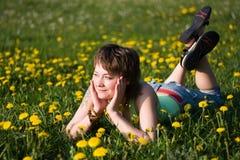Dandelions glade Stock Image