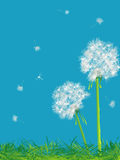 Dandelions and grass. Beautiful dandelions background, abstract art Royalty Free Stock Photos