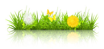 Dandelions and grass. Computer illustration Royalty Free Stock Photos