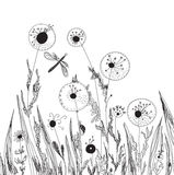 Dandelions and grass nature card Royalty Free Stock Images