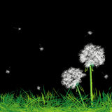 Dandelions and grass in the night. Abstract art Royalty Free Stock Photos