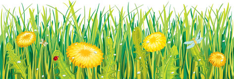 Dandelions in the grass. Yellow dandelions in the beautiful green grass Stock Photo