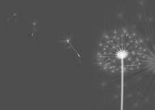 Dandelions gray. White dandelions on a gray background. Vector Stock Images