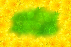 Dandelions. On a green background Stock Images
