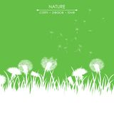 Dandelions on green background Royalty Free Stock Images
