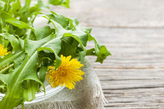 Dandelions greens and flowers Stock Image