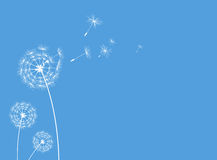 Dandelions greeting card blue Stock Images