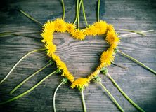 Dandelions in the heart shape on dark background Royalty Free Stock Photos