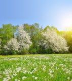 dandelions ilustraci krajobrazu wiosna wektor Obrazy Stock
