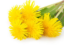 Dandelions isolated on a white background Stock Photos