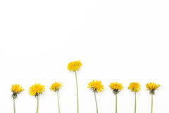 Dandelions isolated on white background. Stock Photography