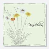 Dandelions kwiaty royalty ilustracja