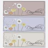 Dandelions kwiaty ilustracji