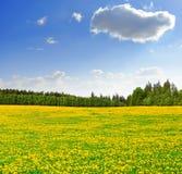 Dandelions in the meadow Stock Photo
