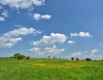 Dandelions meadow and blue sky Royalty Free Stock Photos