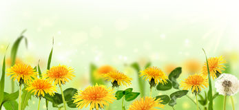 Dandelions in the meadow. Collage. Stock Images
