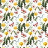 Dandelions , meadow flowers, butterfly, watercolor, pattern seamless. Dandelions  meadow flowers  butterfly watercolor  pattern seamless white background Stock Photos