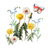 Dandelions , meadow flowers, butterfly, watercolor, pattern Stock Photos