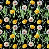 Dandelions , meadow flowers, watercolor, pattern seamless Stock Image