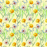 Dandelions , meadow flowers, watercolor, pattern seamless Royalty Free Stock Images
