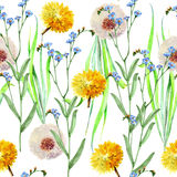 Dandelions , meadow flowers, watercolor, pattern seamless Royalty Free Stock Photos