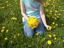 Dandelions for Mommy. A little girl picking dandelions for Mother's Day Royalty Free Stock Images