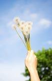 dandelions niebo Zdjęcie Stock