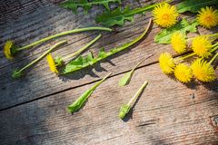 Dandelions on old wooden background Stock Photos