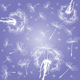 Dandelions over violet sky Royalty Free Stock Photo