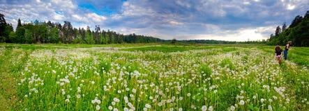 dandelions piękny pole Obrazy Stock