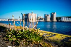 Dandelions on the pier in the background of blue water and building royalty free stock images