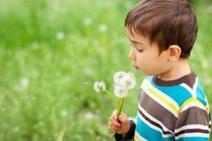dandelions podmuchowy dzieciak Obrazy Stock