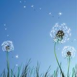 dandelions realistyczni ilustracji